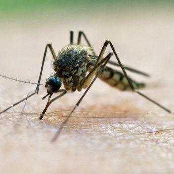 Mücken können eine echte Plage sein. Lasst es nicht soweit kommen. (Source: view.stern.com)