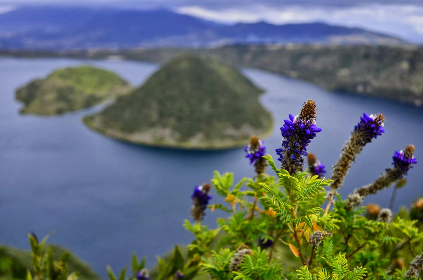 Flora auf über 3.000 Höhenmetern (Foto: Joe Scarangella)Flora auf über 3.000 Höhenmetern (Foto: Joe Scarangella)