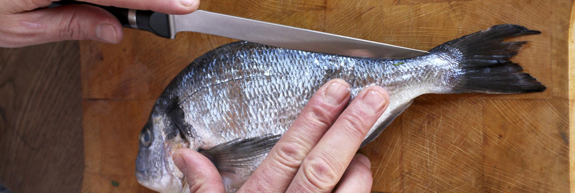 N°221: das Filet-MesserDie Produktpalette umfasst heute auch eine ganze Reihe an Küchenmessern, wie das Brotmesser N°216| Foto: opinel.com