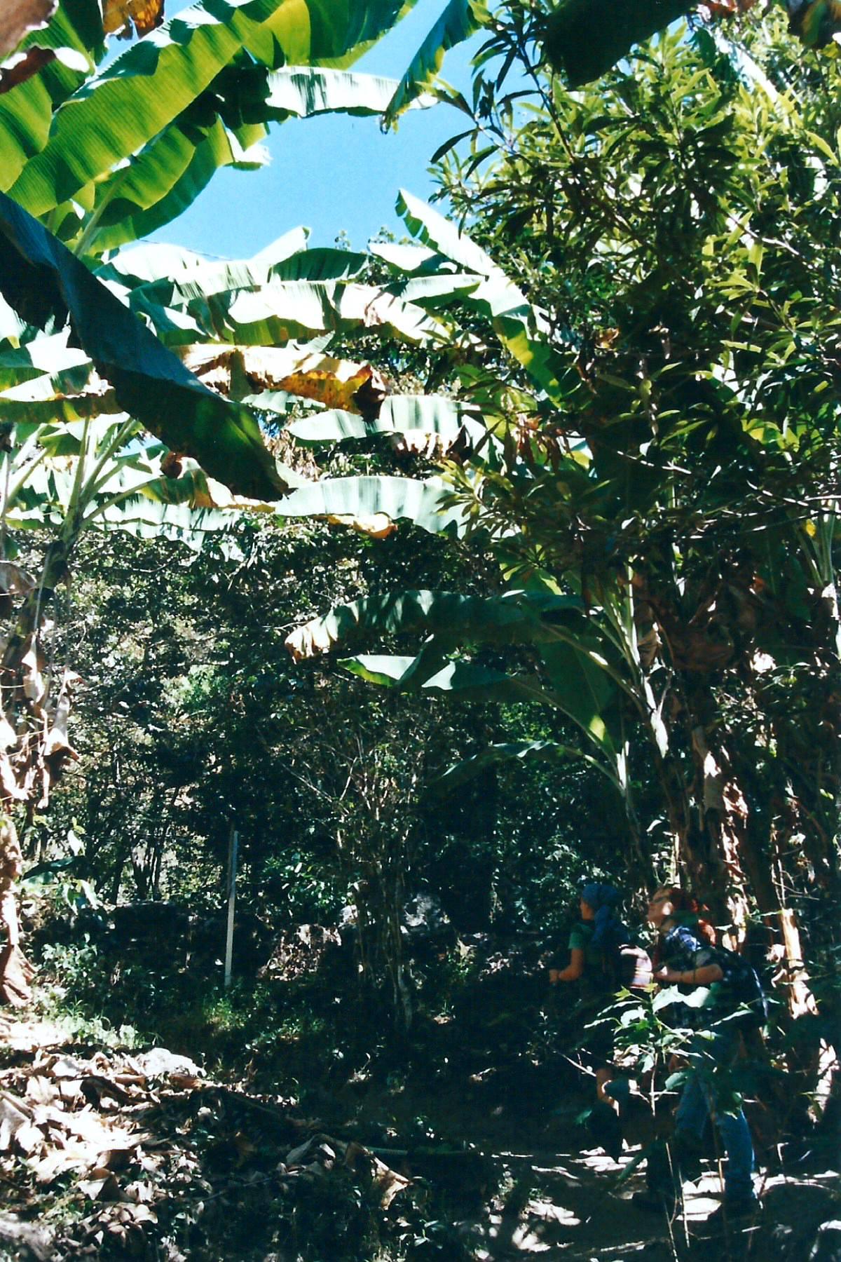 Üppige Vegetation auf dem Weg zum Machu Picchu