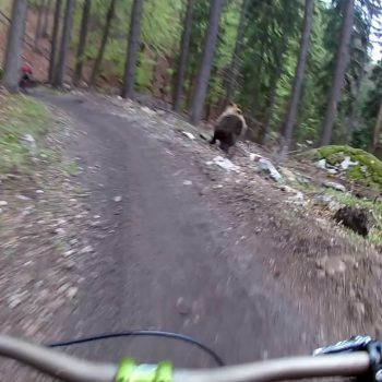 baer-jagd-mountainbiker-slowakei