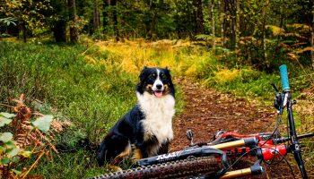 traildog_hunderassen_mountainbike-prime_mtb-10-von-21