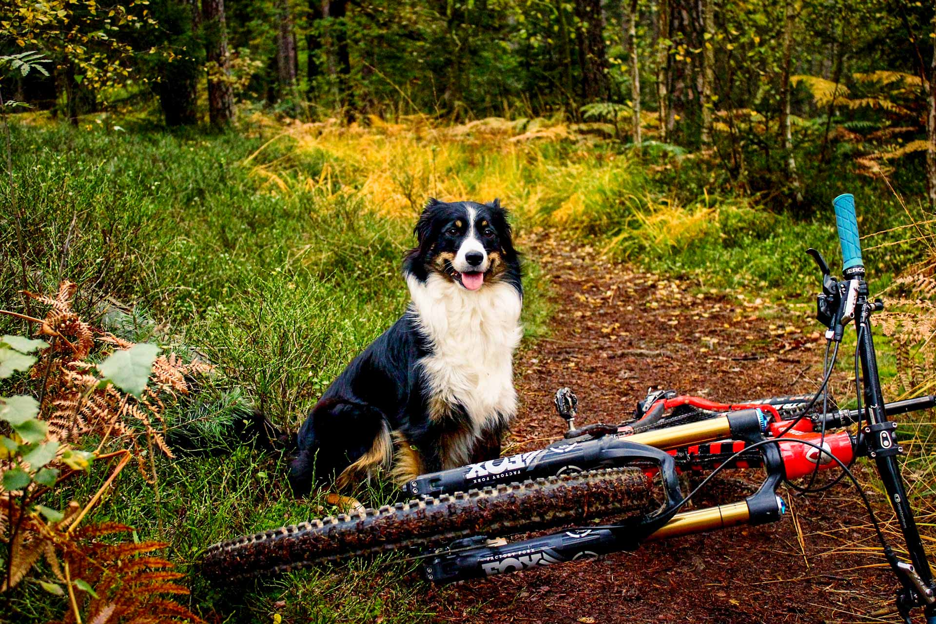 Traildogs MTB