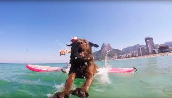 Bono_The_Surf_Dog-696×359